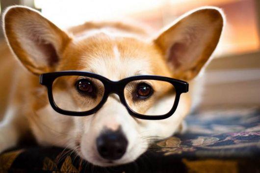 exemplo de óculos de grau para rosto redondo cachorro corgi
