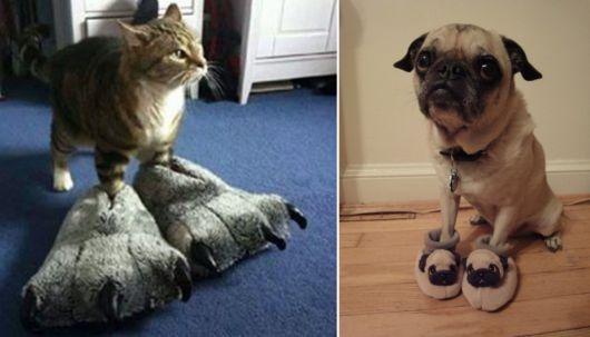exemplo de pantufas femininas engraçadas gato e cachorro com pantufas