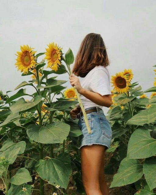 Mulher em plantação de girassóis, vestindo shorts jeans e t-shirt.