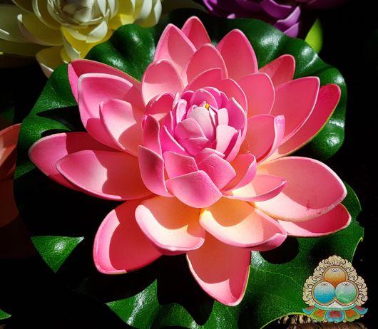 flor de lótus rosa.