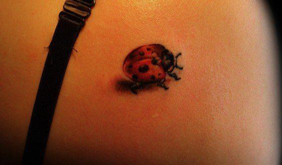 tatuagem de joaninha nas costas