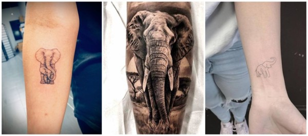 significado para tatuagem de elefante